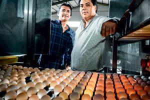comprar ovo direto da granja